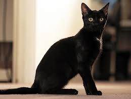 <b>Cat</b> Talk: A Guide to <b>Cat</b> Body Language | Petfinder