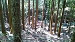 Tokugawa Shogunate Forestry
