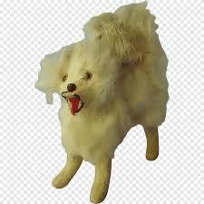 Dog breed Pomeranian Samoyed dog ...