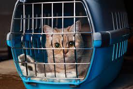 cat in cat basket ile ilgili görsel sonucu