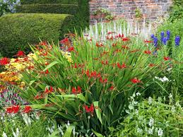 Small Picture How to design and plant a herbaceous border Saga