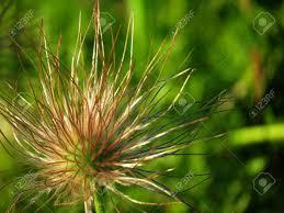 beautiful unusual timber flowerses decorate nature altaya stock photo 23470227