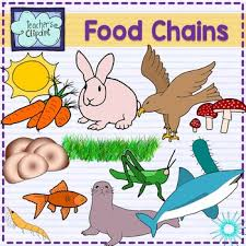 animal food chain. Delighful Food Food Chain Animals Clipart With Animal