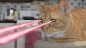 cats shooting lasers out of their eyes. Exellent Cats Cat With Laser Eyes To Cats Shooting Lasers Out Of Their Eyes YouTube
