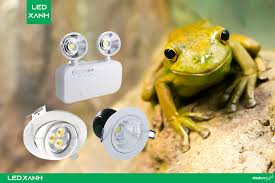 Đèn mắt ếch là gì? Có những loại đèn mắt ếch nào hiện nay? - LED XANH
