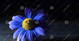 Explore searchviewparamsphrase by color family. Blue Flower Black Background Wallpaper Hd Wallpaper