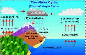 Explain Water Cycle With Diagram For Class 7 Get Rid Of
