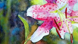 how to paint the rubrum lily in watercolor