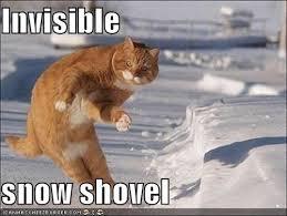 Invisible Cat Meme - Trupanion Blog   Pet Health & Care Advice via Relatably.com