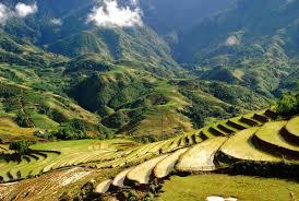 и животноводство Юго Восточной Азии Земледелие и животноводство Юго Восточной Азии