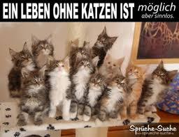 Ein Leben Ohne Katzen Lustige Sprüche