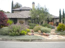 Small Picture Best 25 Drought tolerant trees ideas on Pinterest Blooming