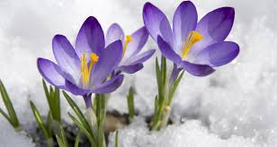 Image result for images of snowy springs
