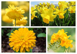 some of the most por yellow flowers