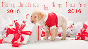 cute merry christmas and happy new year 2015.  Christmas Merry Christmas And Happy New Year 2016 Labrador Puppy Looking Gifts Cute 2015 W