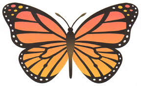 Butterfly Pattern Custom Patterns For Flapping Butterflies
