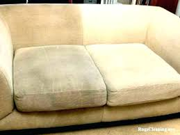 cat on leather couch removing cat urine from couch co cat urine stain on leather sofa