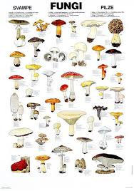 Edible Fungi Chart The Only Veggie That Will Grow Without