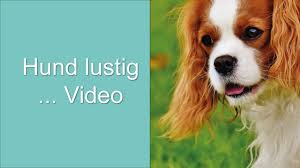 Hund Lustig Video Youtube
