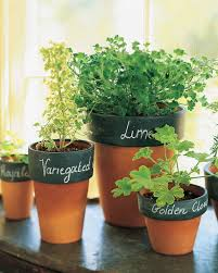 Potted herb gardens  6 Indoor Plants That Will Make Your Winter So Much  More Tolerable