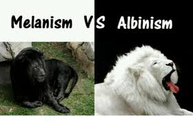 melanistic vs albino humans. Perfect Humans Albinism Human Melanism And Melanated Melanism VS Albinism On Melanistic Vs Albino Humans H