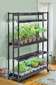 Kitchen Grow Lights Growing Lettuce Indoors Best Types Of Lettuce Variety How To