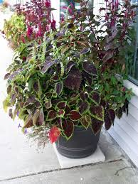Get updates about new products directly to your inbox. Garden Club Focuses On Main Street Wareham