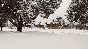 mj27-snow-deer-winter-nature-animals ...