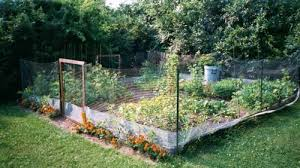 Small Picture Vegetable Garden Fence decorating clear