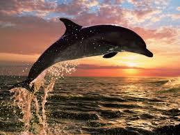 Αποτέλεσμα εικόνας για δελφινάκι