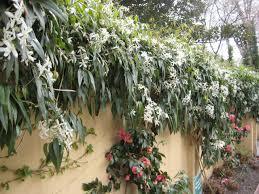 Climbing Plants That Like Shade