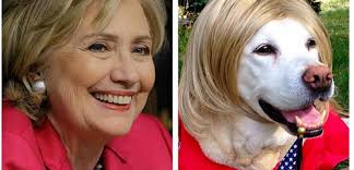 Image result for hillary as dog pics