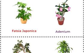 best low light office plants. Fashionable Your Home Or Office Tall Houseplants Look Delight Plants Low Light Co Together With Large Best