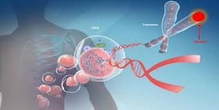 Resultado de imagen de Telómeros