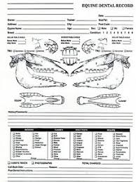 Details About Equine Dental Chart For Equine Dentistry And Veterinary Professional