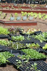 Plants For Kitchen Garden Kitchen Garden Plant Ideas From A White House Visit