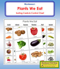 Plants We Eat Cards And Chart