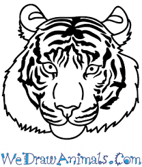 how to draw a bengal tiger face