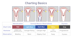 Cervical Mucus Chart Example How To Chart Femm Health