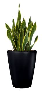 small plant for office desk. 2 sansevieria floor plants small plant for office desk