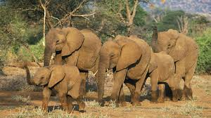 essay on elephant for the students and children