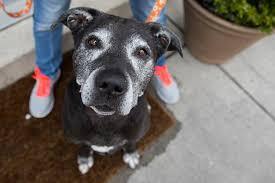 Canine Lymphoma Symptoms Lymphoma In Dogs Best Friends Animal Society