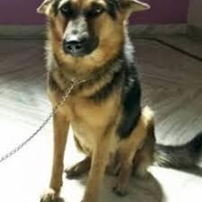 people for s jummerat bazar dog adoption centres in