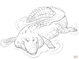 Dessin De Coloriage Crocodile Imprimer Cp08889