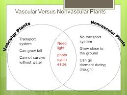 Venn Diagram Of Vascular And Nonvascular Plants Plant Diversity And Life Cycles Ppt Download