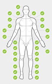 Body Chart Dribbble Body Chart Anterior Png By Chris Wharton