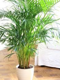 low maintenance house plant houseplants easy care plants indoor gardening best starter nz