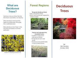 deciduous trees powerpoint presentation