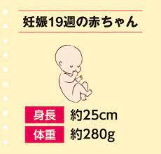 妊娠 五 ヶ月