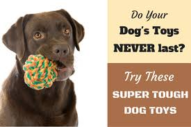 a chocolate lab with a rope knot durable dog toy in it s mouth